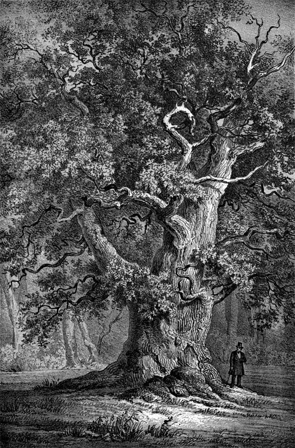 Amalieneiche im Hasbruch um 1863, Eduard Mielck