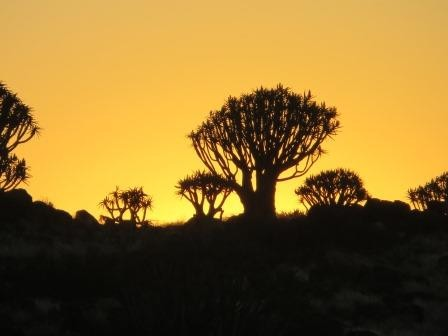 Sonnenuntergang im Köcherbaumwald
