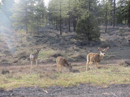 ...langohrige Deers....