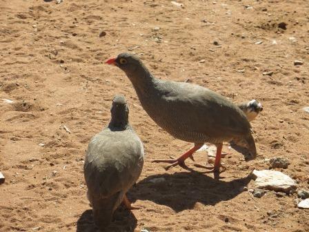 Viele bunte Vögel tummelten sich auf dem Gelände...