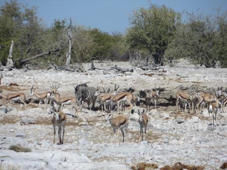 Etosha Nationalpark - viel los am Wasserloch