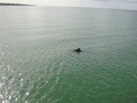 Unser erster freilebender Delfin :D