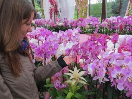 Keukenhof - auch Orchideen gibt es hier