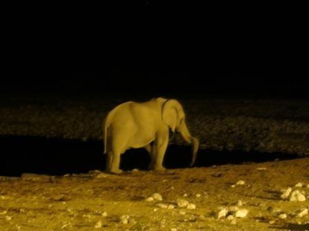 entspannter Elefant am Okaukuejo Wasserloch