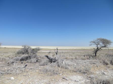 Etosha Nationalpark - Salzpfanne