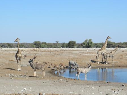 Etosha Nationalpark - Wasserloch