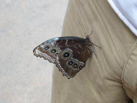 Schmetterlingspark Hunawihr
