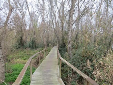 Holzbohlenweg am Rio Cinca
