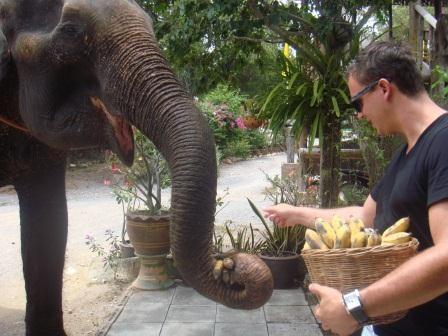 Bananenstauden zur Belohnung