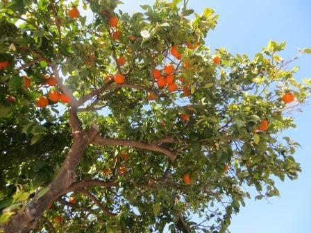 Spaziergang durch Isla Plana und Umgebung