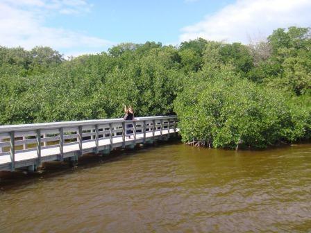 In den Everglades