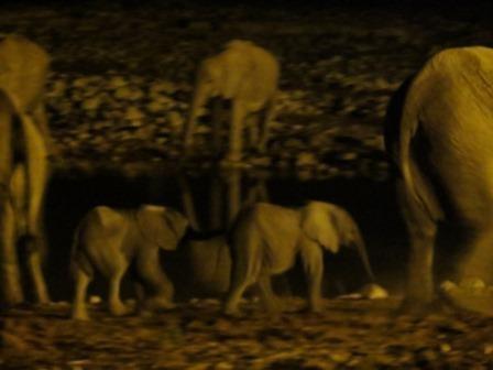 junge Elefanten Okaukuejo Wasserloch
