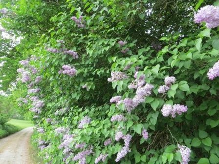 Im Hainich Nationalpark - schöne Blumen