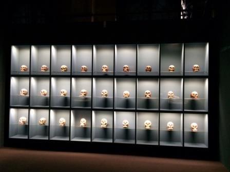 Schädel-Ausstellung