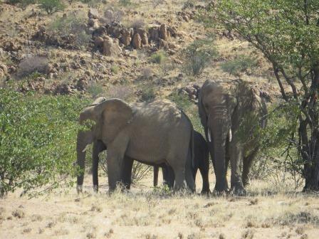 wilde Elefanten am Wegesrand
