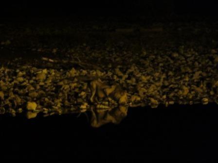 Löwe am Okaukuejo Wasserloch