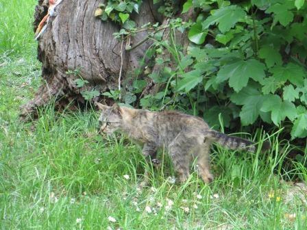 Eine Wildkatze?!