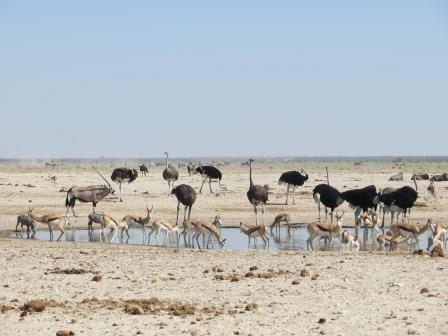 Etosha Nationalpark - Action am Wasserloch