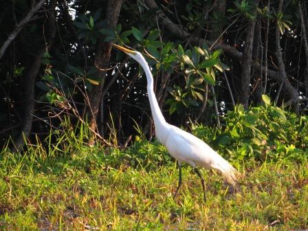 JN Darling National Wildlife Refuge am Abend