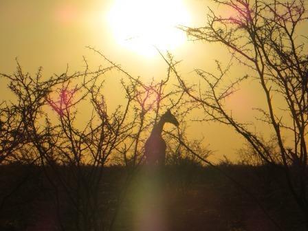 Abendstimmung im Etosha Nationalpark