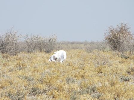 Etosha Nationalpark - Elefantenschädel