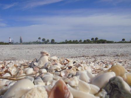 Am Bowmans Beach auf Sanibel Island