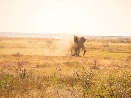 Etosha Nationalpark - Elefanten