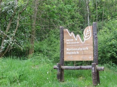 Im Hainich Nationalpark