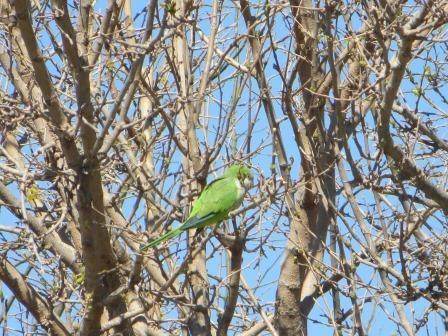 Papageien im Montjuïc