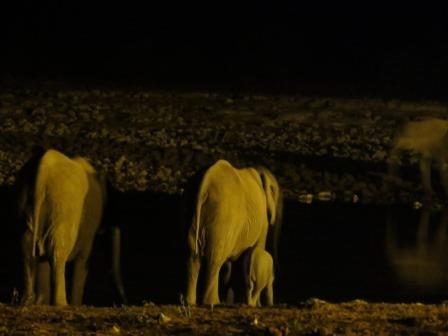 Elefantenherde am Okaukuejo Wasserloch