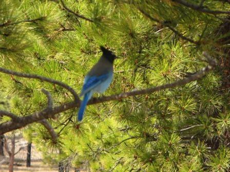 Eisblaue Vögel...