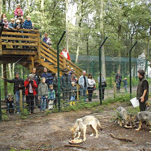Schaufütterung in einem Wolfscenter