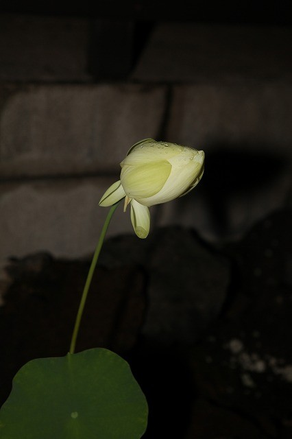 4th Day Flower at 12:48 a.m.