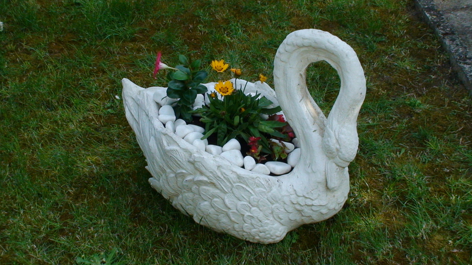 un cygne s'est posé au jardin