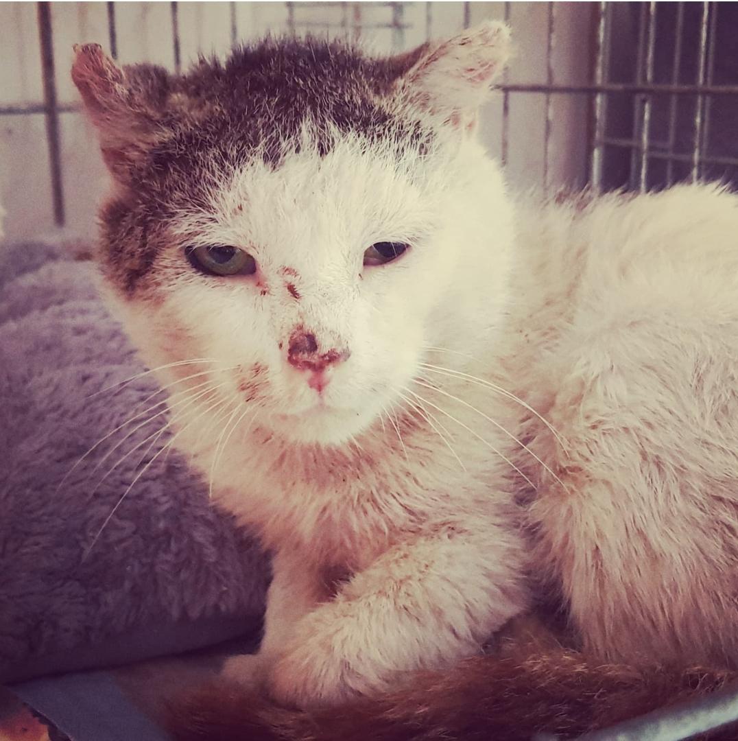 Filou : siehe Katzenvermittlung ❤