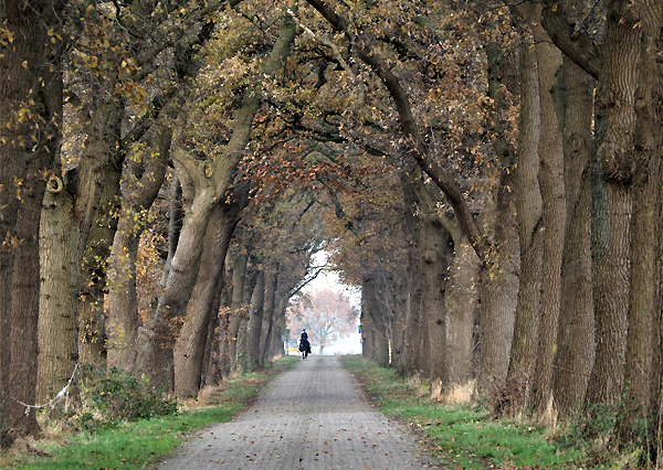 'Allee des Monats November' (Foto: H. Heinze)
