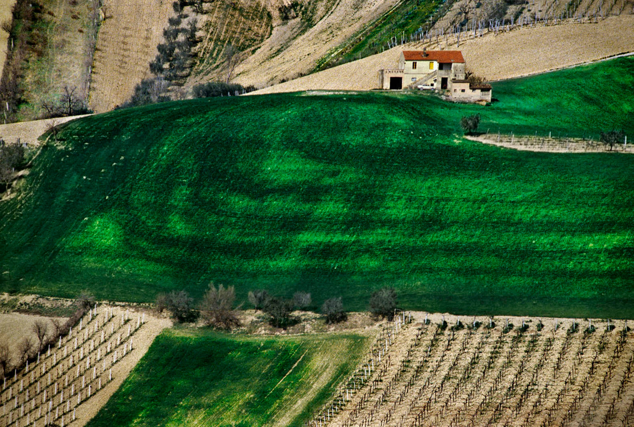 Our land (Picene countryside, Italy)