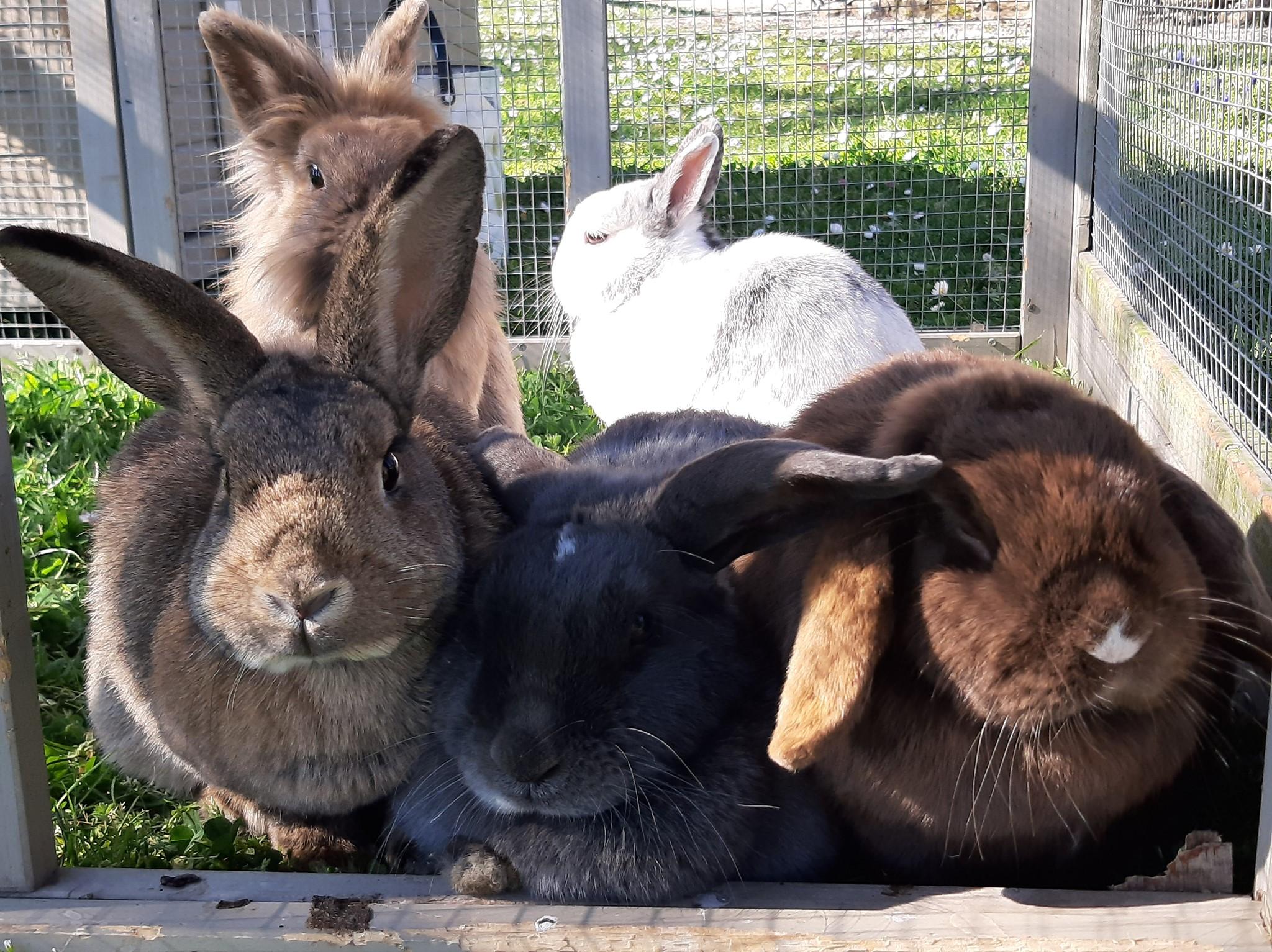 Nos lapins prennent un bain de soleil dans leur espace extérieur...