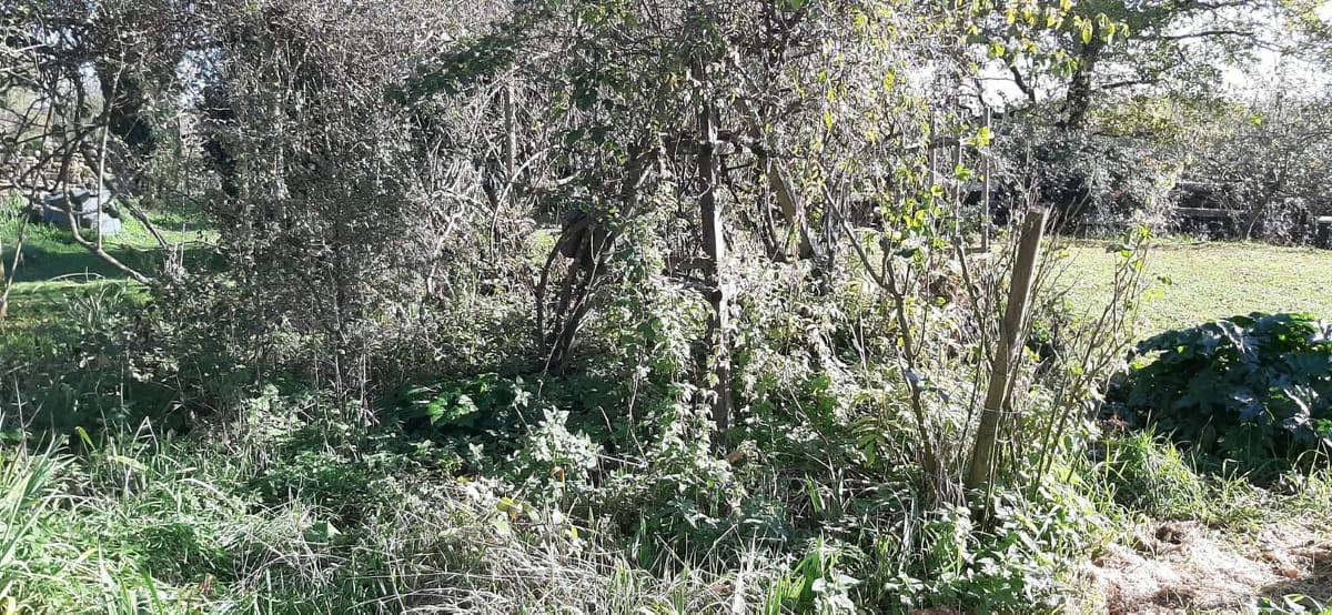 La jungle... AVANT...