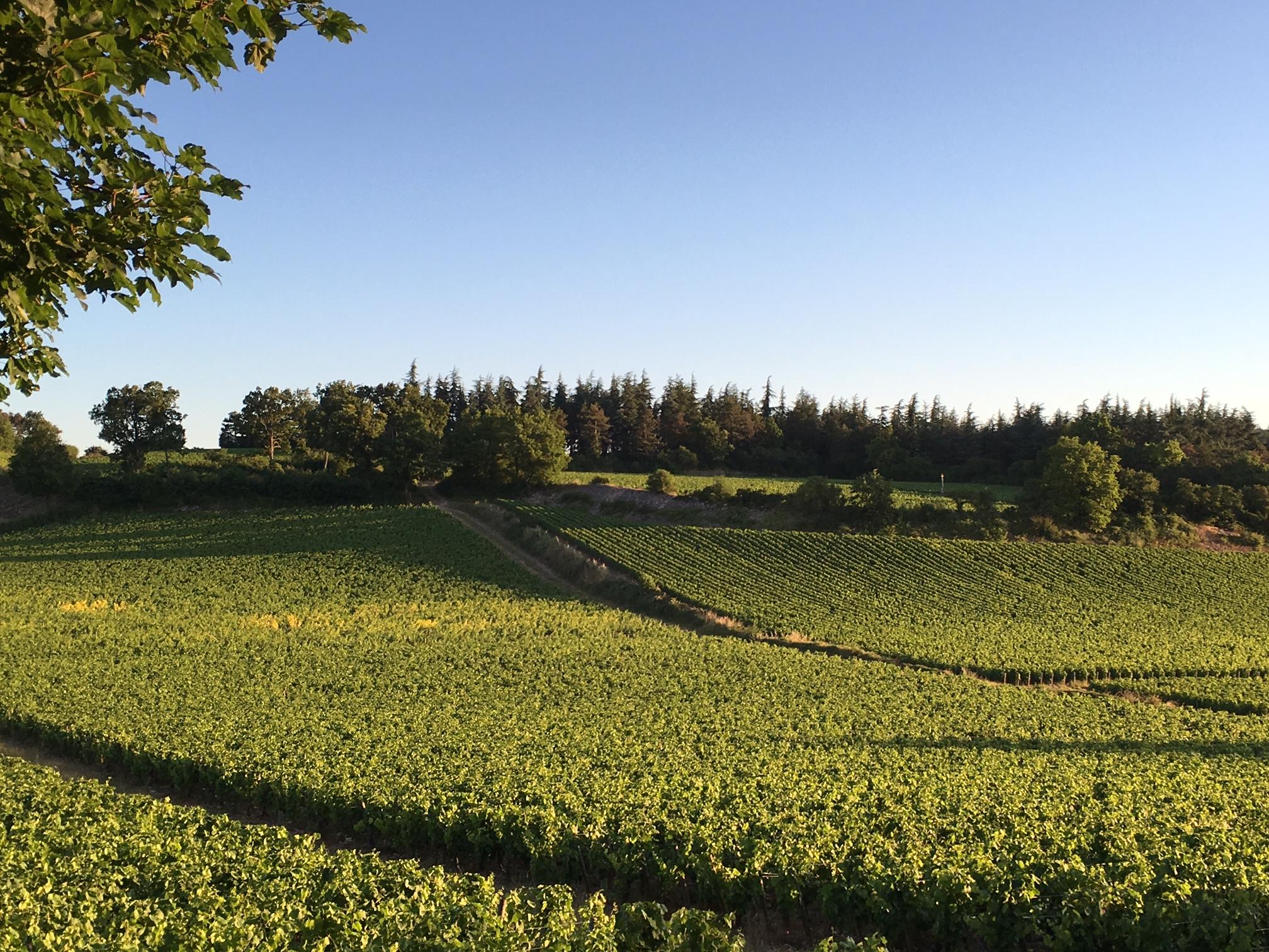 Mercurey view