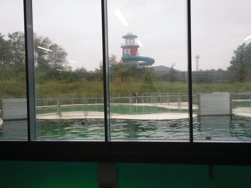 In der Seehund-Aufzuchtstation