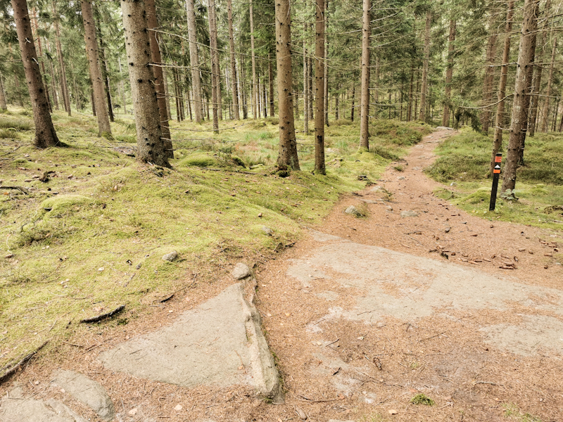 Typical trail today. Well marked, well formed.