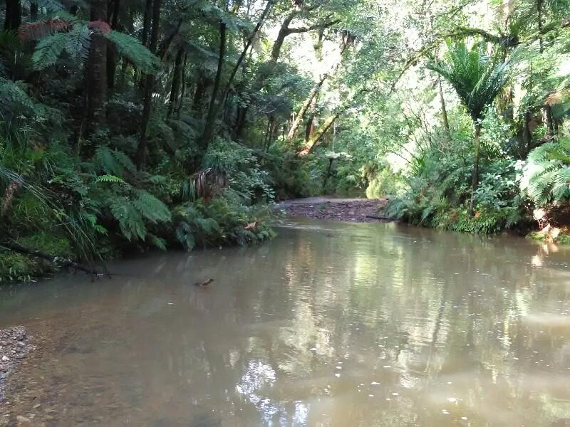 Wading upstream