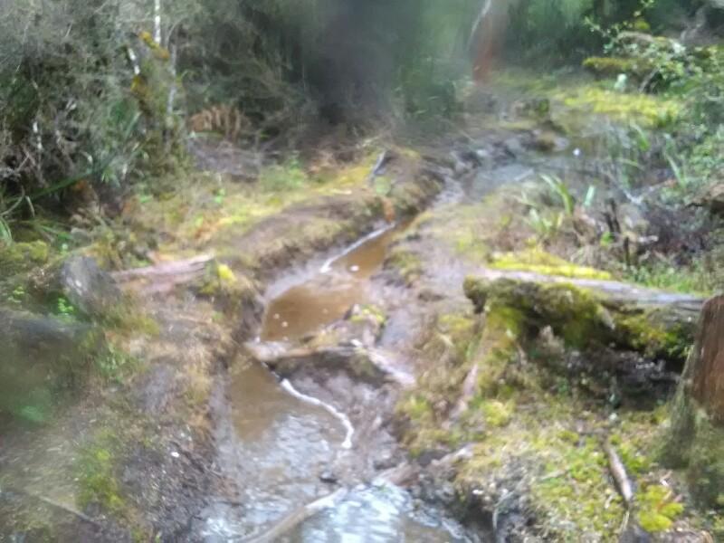 Wet Mangahuia Track