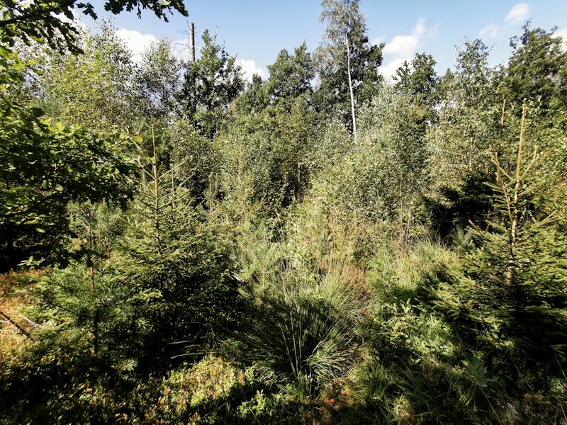 Overgrown trail ahead