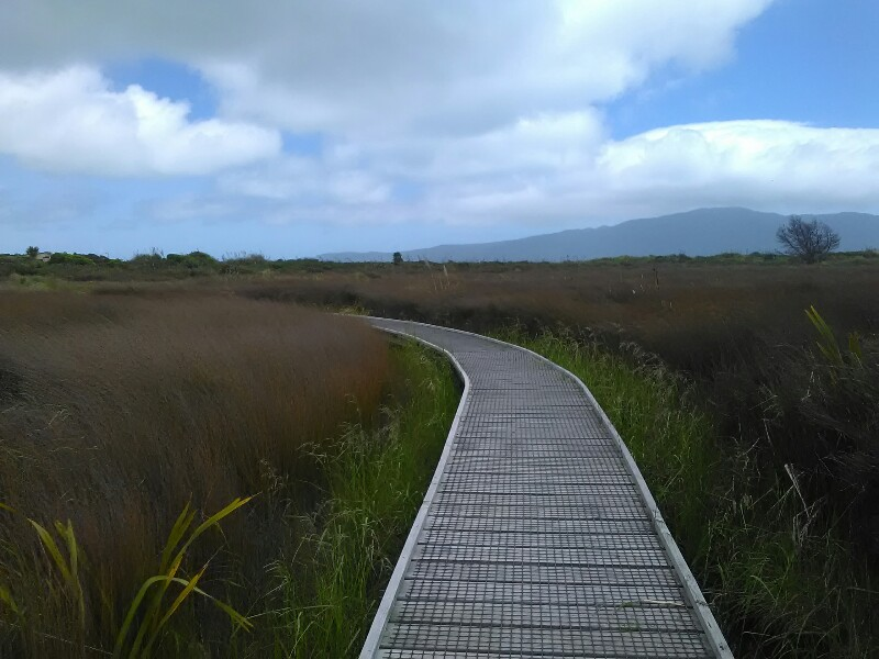 Boardwalk through Waikanae Estuary