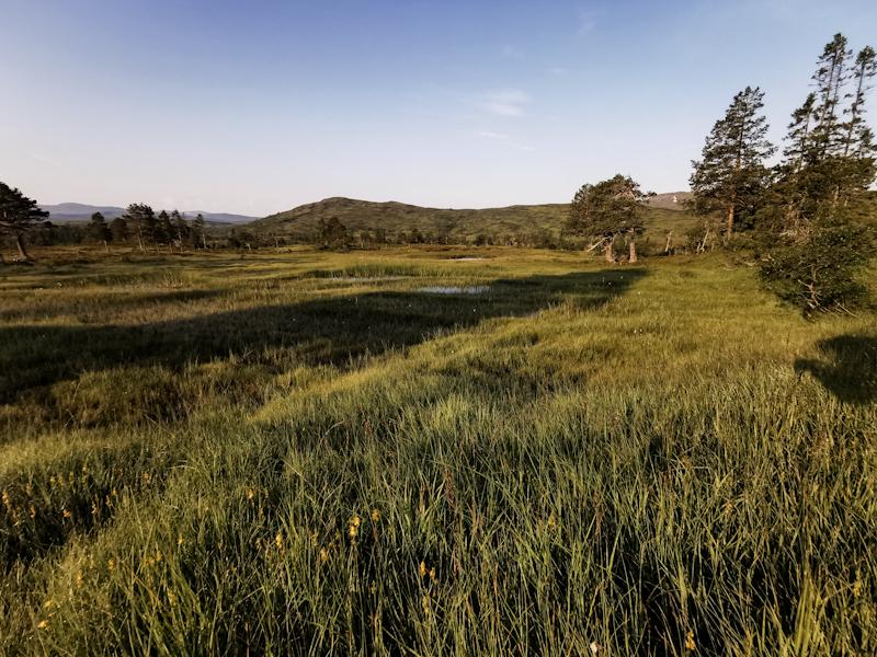 Wetlands in early morning light