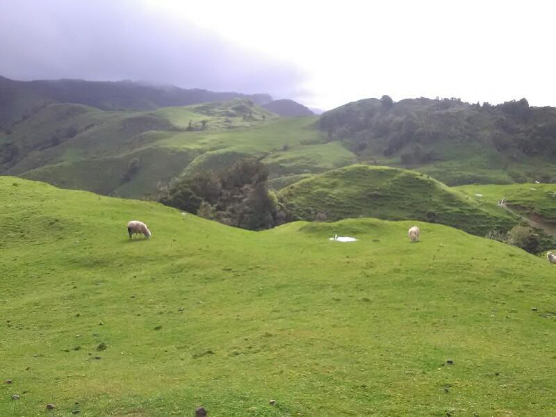 Pasture...