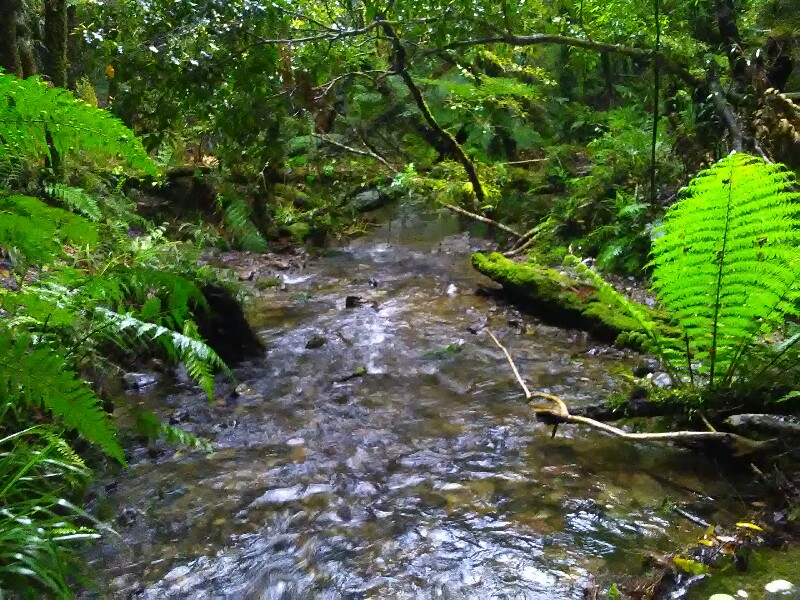 Lovely Makahika Stream