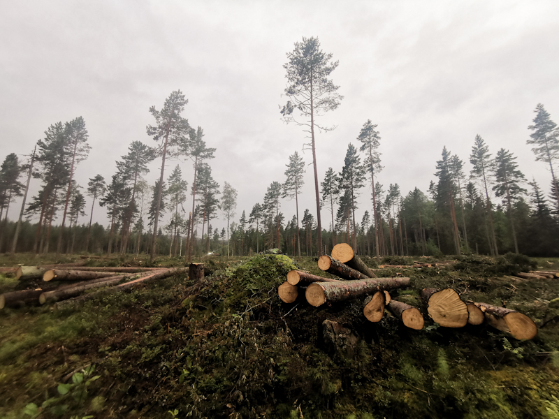 Lot of logging going on along the way
